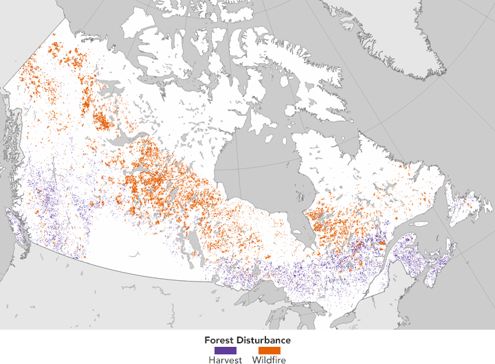 Tracking Forest Change in Canada