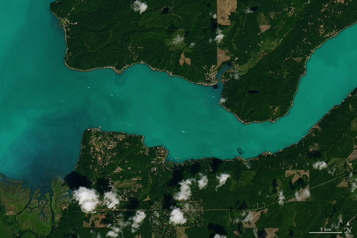 Plankton Abloom in Washington's Hood Canal