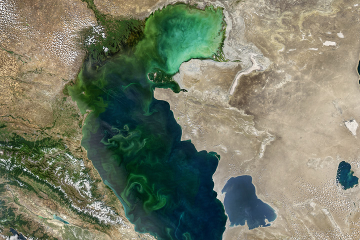 Blooms in the Caspian Sea