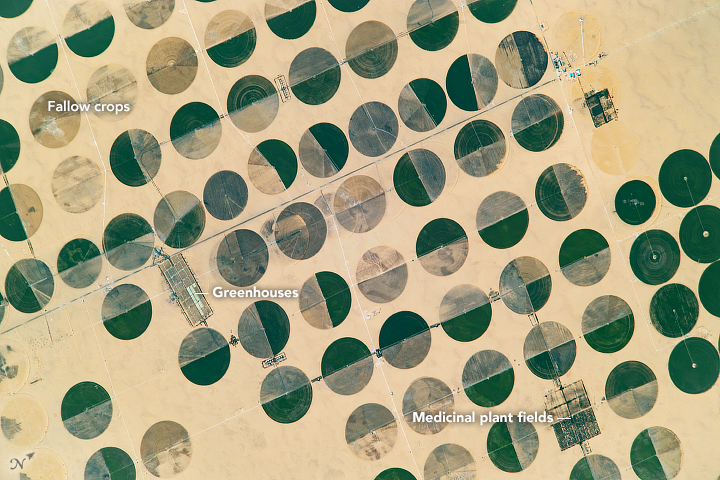 Crop Circles in Sharq El Owainat