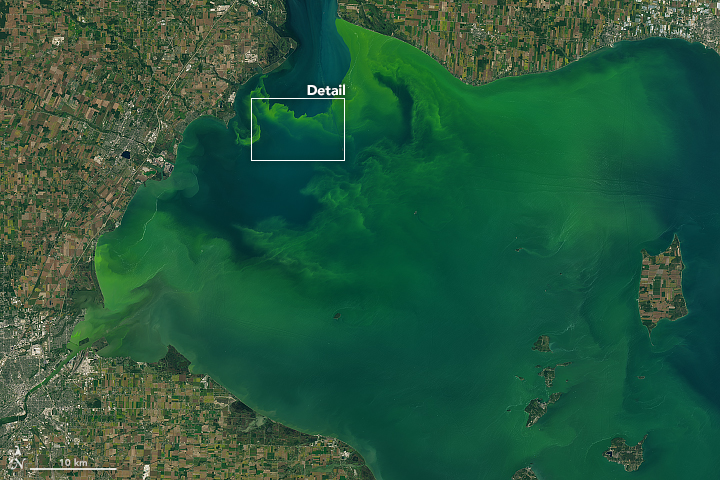 Algal bloom in Lake Erie from satellite