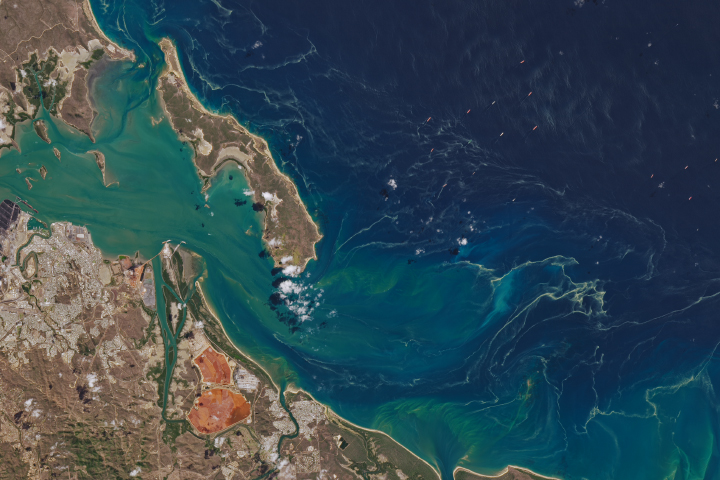 Sea Sawdust off Gladstone