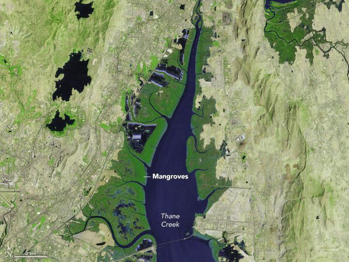 Monitoring Mumbai's Mangroves - related image preview