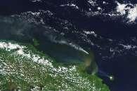 Papua New Guinea Plumes