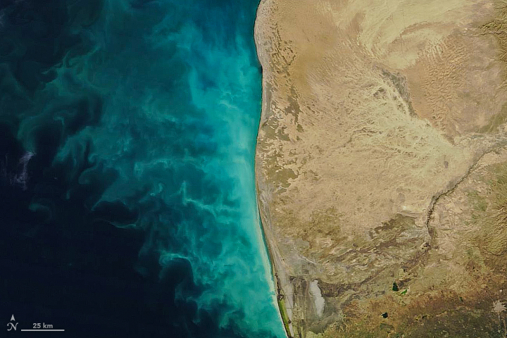 Tendrils of Sediment in the Caspian Sea