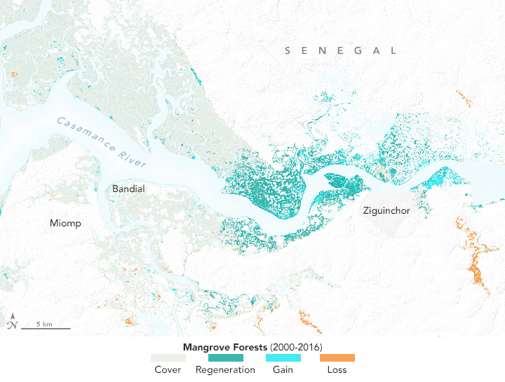 The Spread of Mangroves in Senegal  - related image preview