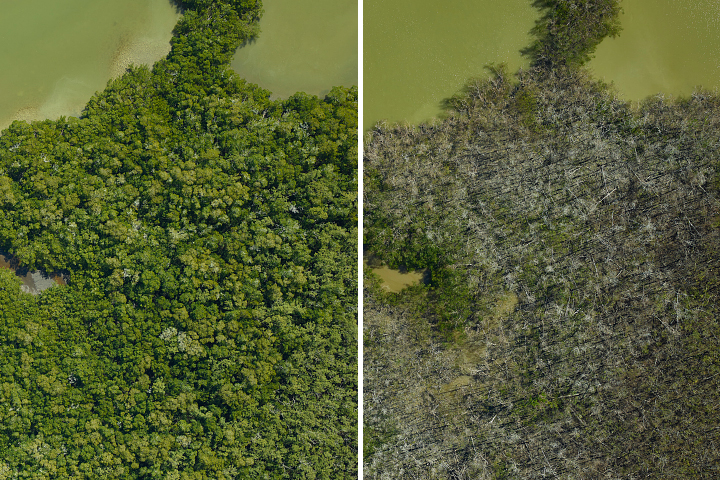 NASA Mapping Hurricane Damage to Everglades - related image preview