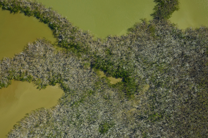 NASA Mapping Hurricane Damage to Everglades