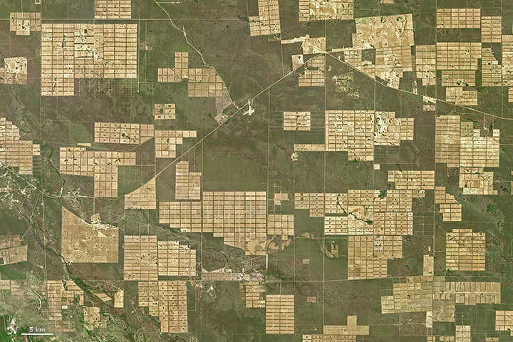 Deforestation in Paraguay - related image preview