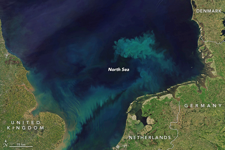 Spring Color in the North Sea - related image preview