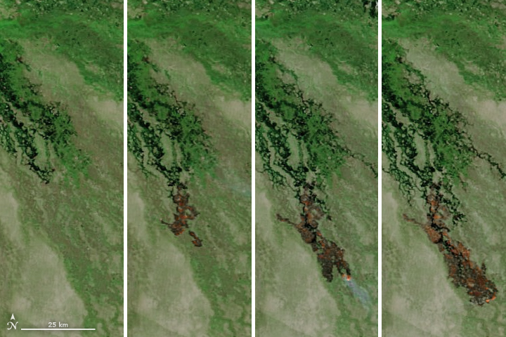 Fire Marches Across the Okavango Delta - related image preview