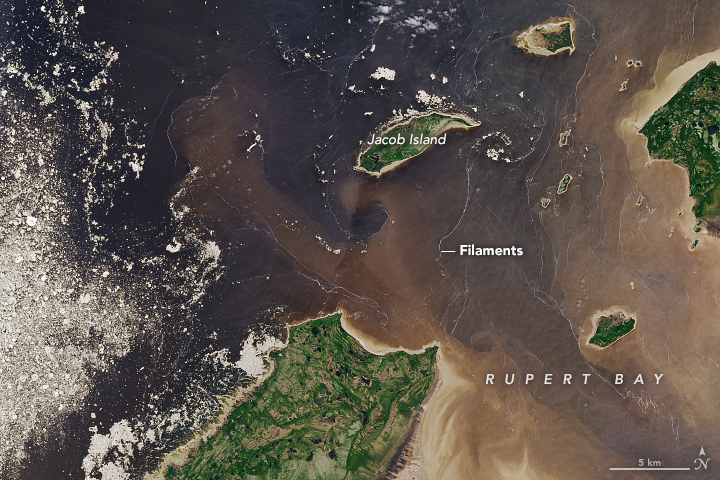 Filaments and Color in Rupert Bay