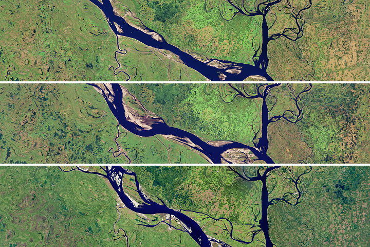 Meandering Bends of the Lower Padma River - selected image