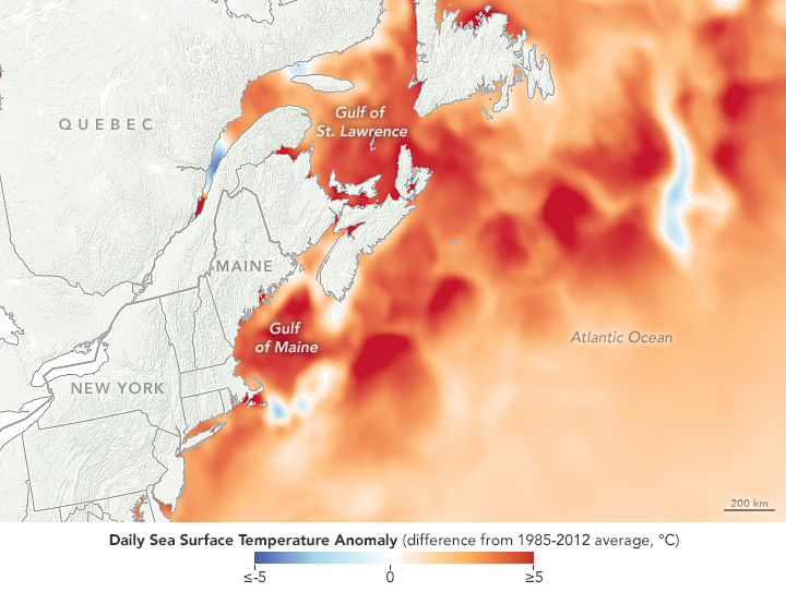 Watery Heatwave Cooks the Gulf of Maine