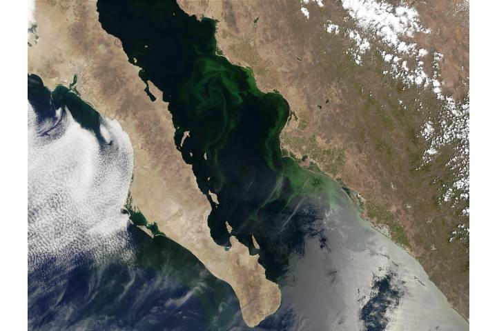 Phytoplankton bloom in Gulf of California, Mexico - selected image